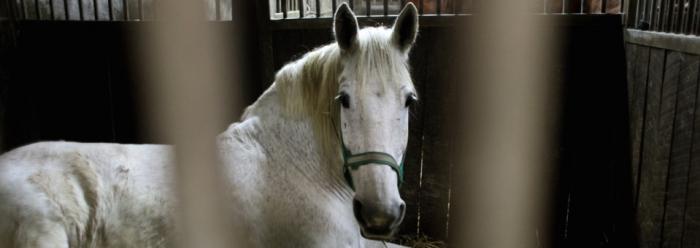21957_horselying80p_6_959x340.jpg
